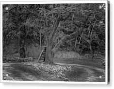 Copo De Leite-2-mendes-rj Acrylic Print