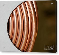 Copper Curves Acrylic Print