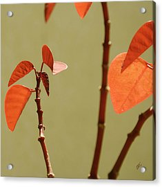 Copper Plant 2 Acrylic Print by Ben and Raisa Gertsberg