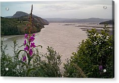 Copper River Fireweed Acrylic Print by Adam Owen