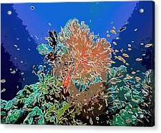 Coral And Fish In Ocean 3 Acrylic Print by Lanjee Chee