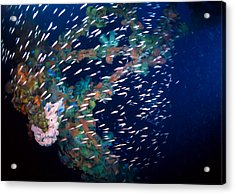 Coral And Fish In Ocean 4 Acrylic Print