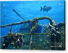 Coral And Fish On A Caribbean Shipwreck Acrylic Print