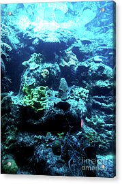 Acrylic Print featuring the photograph Coral Art 4 by Francesca Mackenney