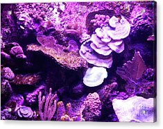Acrylic Print featuring the digital art Coral Art 5 by Francesca Mackenney