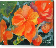 Acrylic Print featuring the painting Coral Begonias by Kathy Braud
