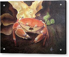 Coral Crab Acrylic Print by Adam Johnson