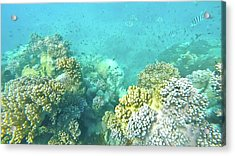 Acrylic Print featuring the photograph Coral by Debbie Cundy