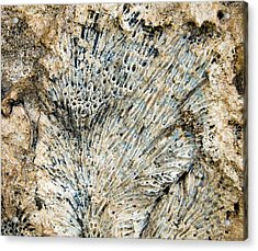 Acrylic Print featuring the photograph Coral Fossil by Jean Noren