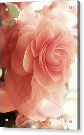 Peach Petals Glow Acrylic Print by Mindy Sommers