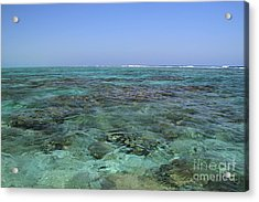 Acrylic Print featuring the photograph Coral Reef And Breakers by Edward R Wisell