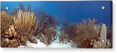 Coral Reef Acrylic Print by Peter Scoones
