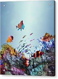 Coral Reef Acrylic Print by Varpu Kronholm
