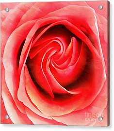 Acrylic Print featuring the photograph Coral Rose - My Pleasure - Rose by Janine Riley