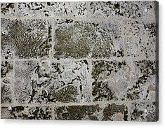 Coral Wall 205 Acrylic Print by Michael Fryd