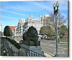 Acrylic Print featuring the photograph Corcoran Lion by Victoria Lakes