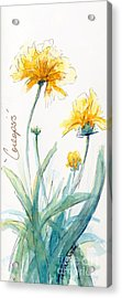 Coreopsis Acrylic Print by CheyAnne Sexton