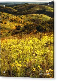 Coreopsis In The Arbuckles, Vertical Acrylic Print by Tamyra Ayles