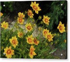 Coreopsis Tickseed Acrylic Print