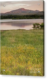 Corepsis Blooming At The Quanah Parker Lake Acrylic Print by Iris Greenwell