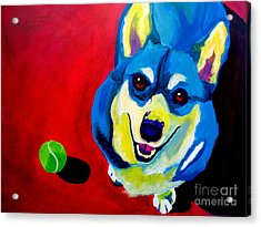 Corgi - Play Ball Acrylic Print