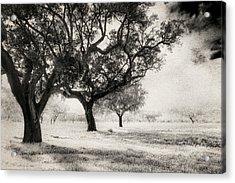 Cork Trees Acrylic Print
