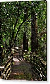 Corkscrew Swamp Acrylic Print by Nick  Shirghio
