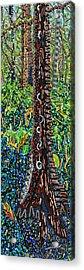 Corkscrew Swamp Sanctuary 2 Acrylic Print by Micah Mullen