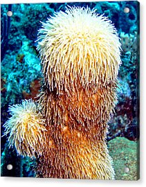 Acrylic Print featuring the photograph Corky Sea Finger Coral - The Muppet Of The Deep by Amy McDaniel