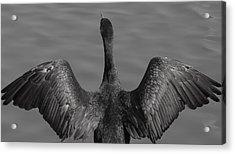 Cormorant 3 Acrylic Print