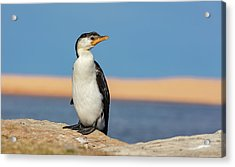 Acrylic Print featuring the photograph Cormorant by Chris Cousins