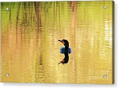 Cormorant With Reflections Acrylic Print by Charline Xia