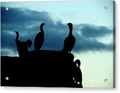 Cormorants In Silhouette Acrylic Print