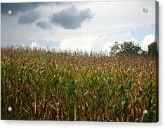 Corn Acrylic Print by Dennis Curry
