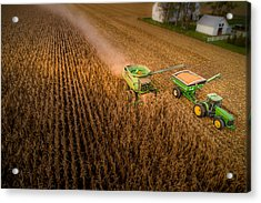 Corn Dust Acrylic Print