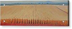 Corn Field Acrylic Print