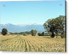 Corn Field With Terminillo Mount Acrylic Print