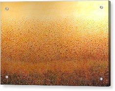 Corn Glow Acrylic Print