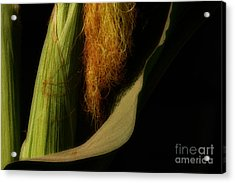 Corn Silk Acrylic Print by Linda Shafer