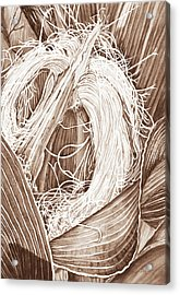 Corn Silk - Neutral Acrylic Print