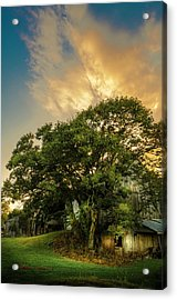 Corner Oak Acrylic Print by Marvin Spates