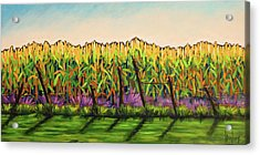 Cornfield Color Acrylic Print