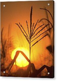 Cornfield Sunset Acrylic Print by Garry McMichael