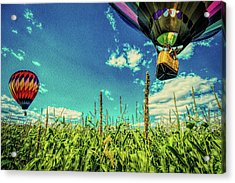 Cornfield View Hot Air Balloons Acrylic Print by Bob Orsillo