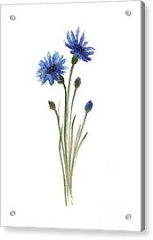 Cornflowers Art Print, Minimalist Watercolour Painting, Blue Green Brown Wall Decor Acrylic Print by Joanna Szmerdt