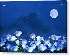 Cornflowers In The Moonlight Acrylic Print