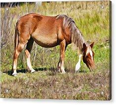 Corolla's Wild Horses Acrylic Print