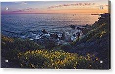 Corona Del Mar Super Bloom Acrylic Print