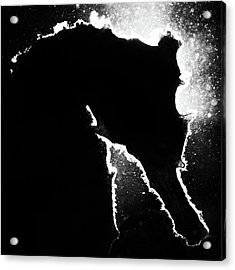 Cortez Seahorse Acrylic Print