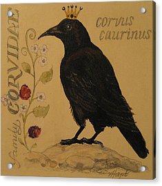 Corvus Caurinus Acrylic Print by Victoria Heryet